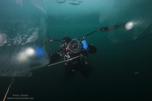 Tech diver swimming near the sheer cliff overgrown baikal sponges, demosponge (lubomirskia baicalensis), lake baikal